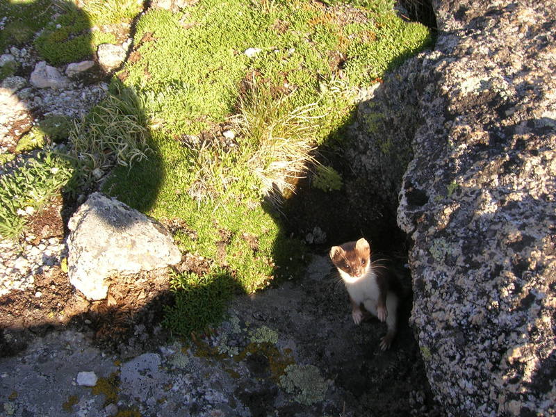 Curious critter looking for a handout at the Black Wall.
