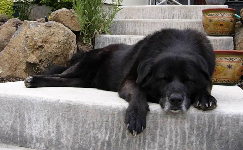 My loyal climbing/mountain rescue dog, Cohosh.
