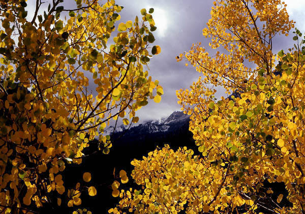 Autumn in the Wasatch.<br> Photo by Blitzo.