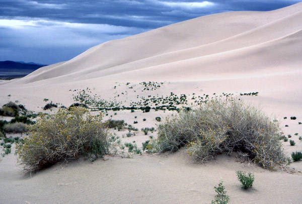 Beautiful desolation! Sand Mountain, Nevada.<br> Photo by Blitzo.