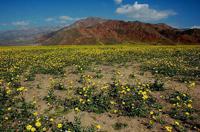 Death Valley-Spring.<br> Photo by Blitzo.