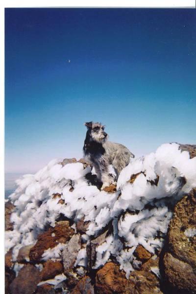 Barley on top of Mt Humphreys, Flagstaff, AZ.  Just shy of 13,000