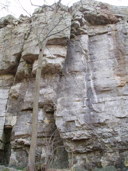 The pride of the Red Bird Statue Area:<br> <br> 5.8 Crack (5.10) on the left<br> Fern Route (5.11-) in the middle<br> Several face climbs near the water streaks on the right.