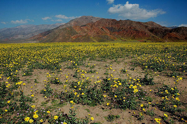 Death Valley-Spring 2005.<br> Photo by Blitzo.