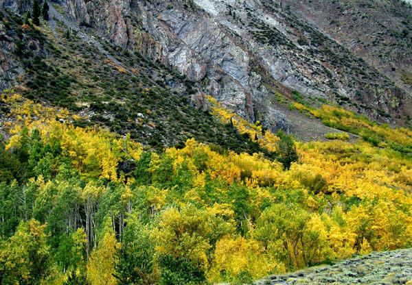 Mc Gee Creek-Autumn.<br> Photo by Blitzo.
