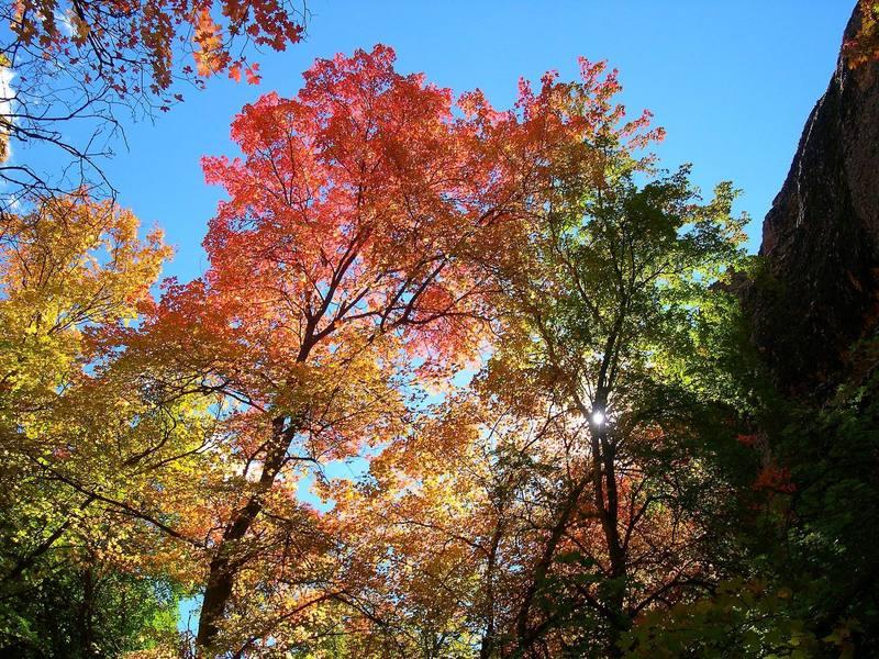 Fall colors at the Orangutan Wall