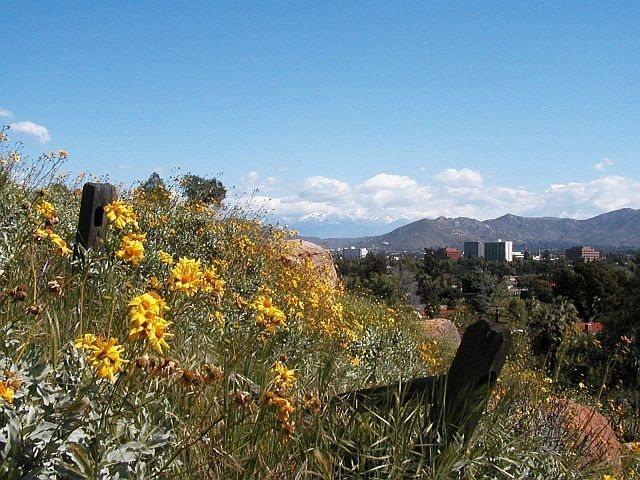 Springtime, Mt. Rubidoux
