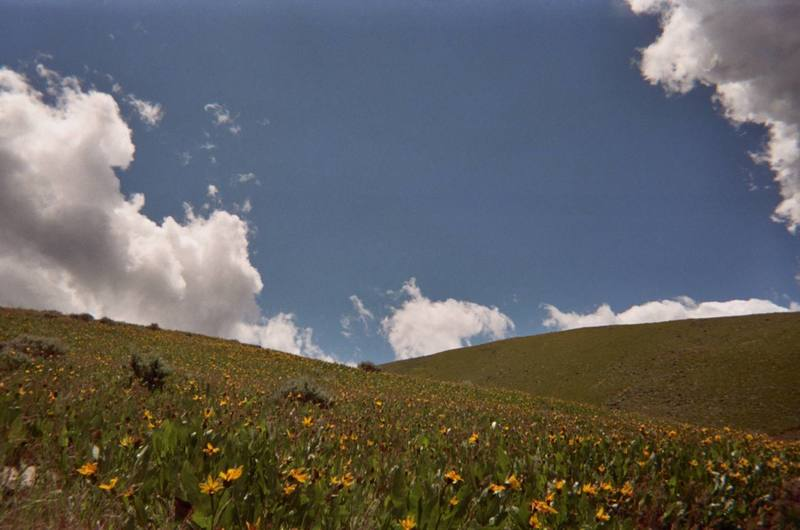 Daisy fields Toole