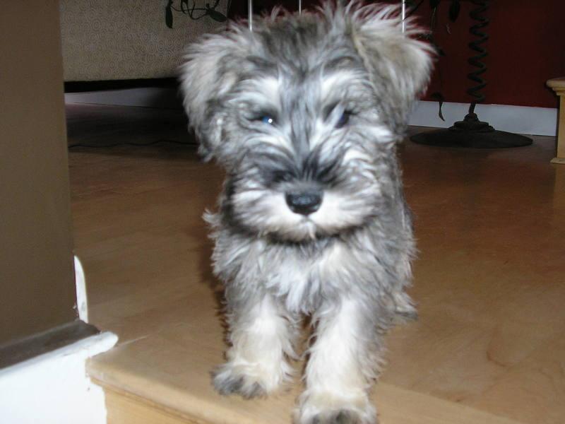 Roggen's puppy fluff.