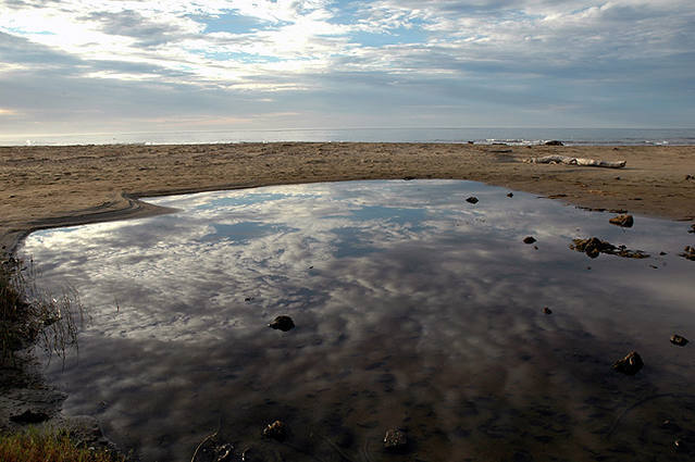 Tidal Pool-Central Coast.<br> Photo by Blitzo.