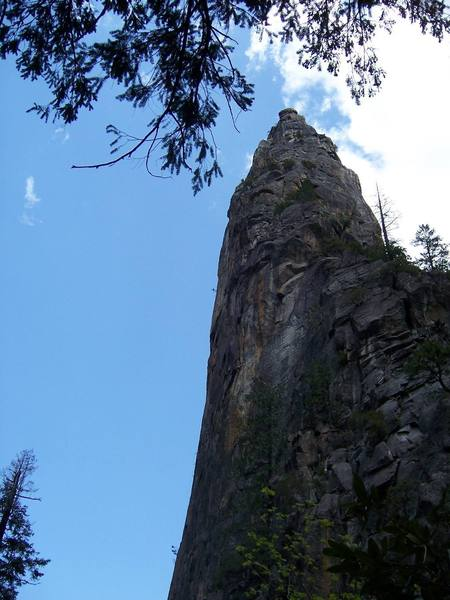 The regular route follows the bushes to the top.