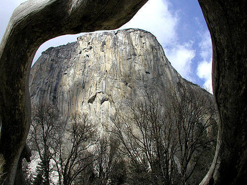 """El Cap through a dead, fallen tree arch.<br> The NPS has since burned up the arch in one of their """"Controlled"""" burns.<br> Photo by Blitzo."""