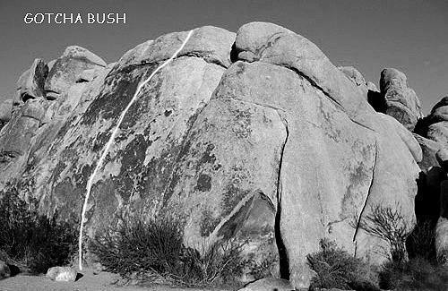 """Gotcha Bush"".<br> Photo by Blitzo."