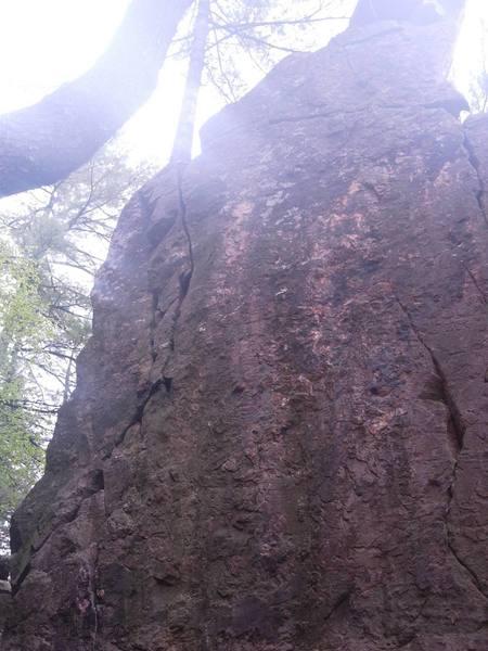 pine tree crack