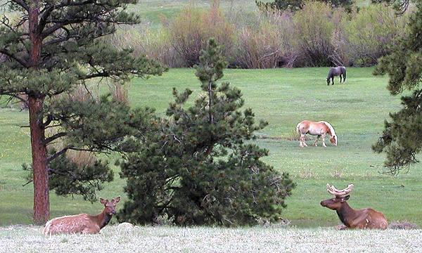 Elk and horses-Lumpy Ridge.<br> Photo by Blitzo.