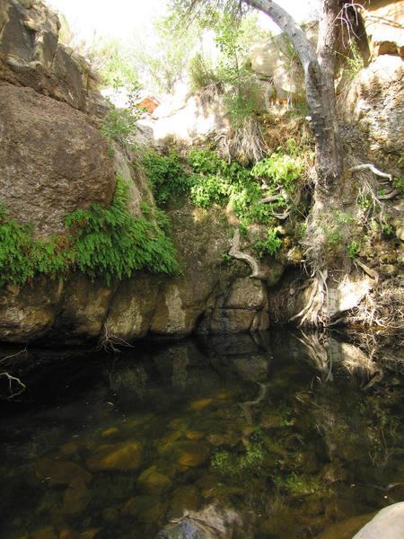 Waterfall on First Creek. July 2007.