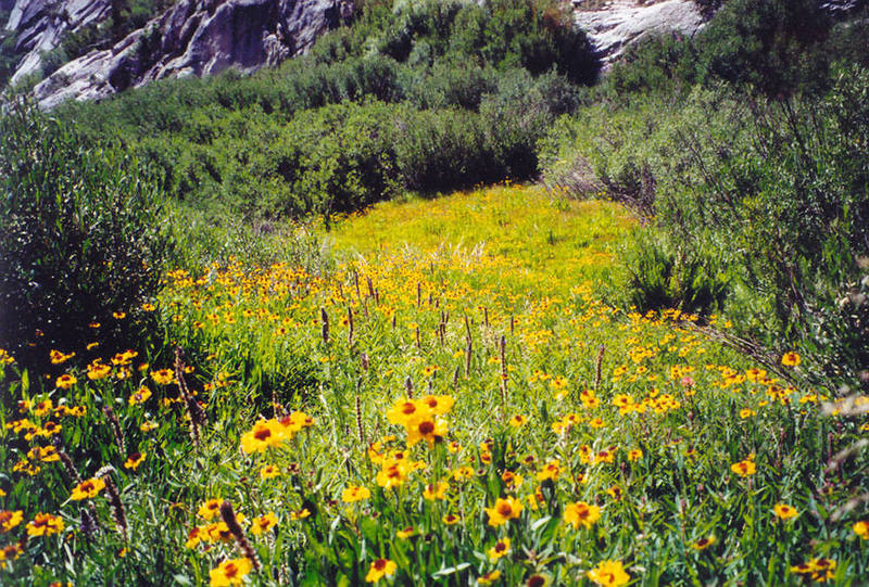Flowers; Lower Sphinx Lake environs photo by Noreen Owen