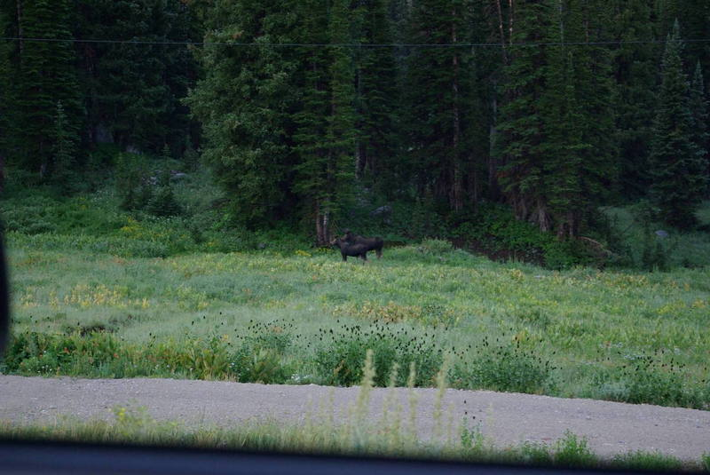 Some of the wildlife commonly encountered in this area
