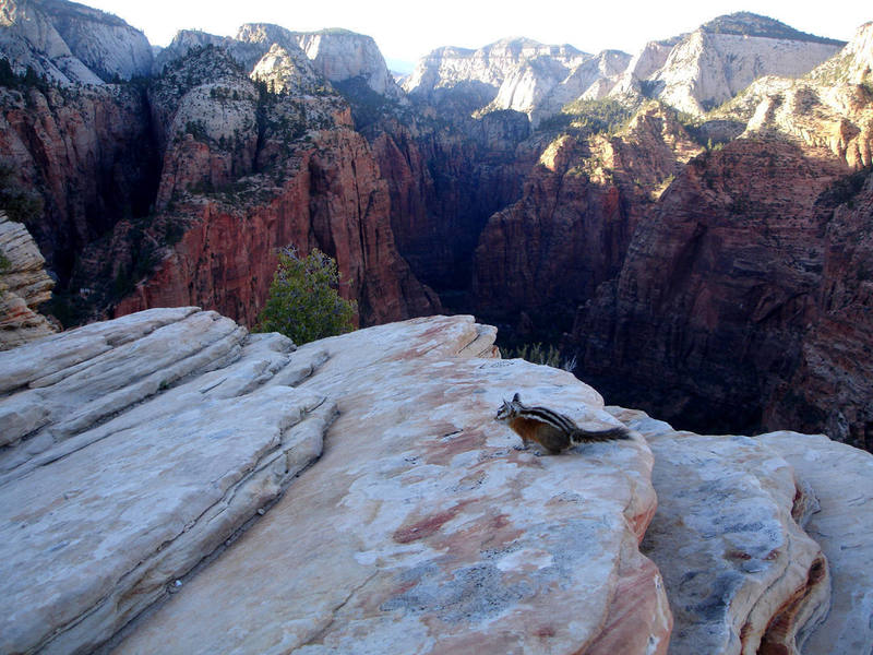 Angel's Landing, Zion.<br> <br> A perfect evening hike.<br> <br> (Taken 8/7/07)