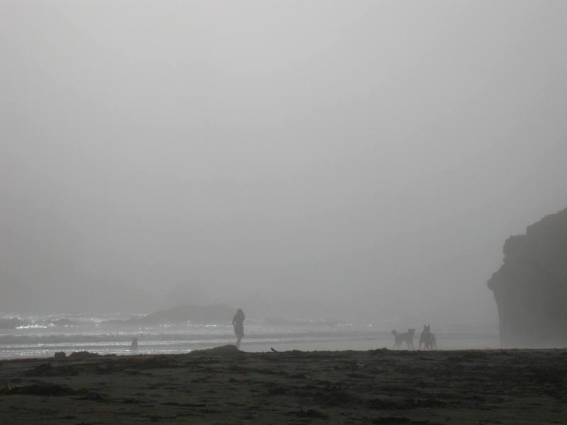A misty Humboldt afternoon.