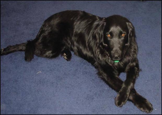 Roman the Wonder Dog