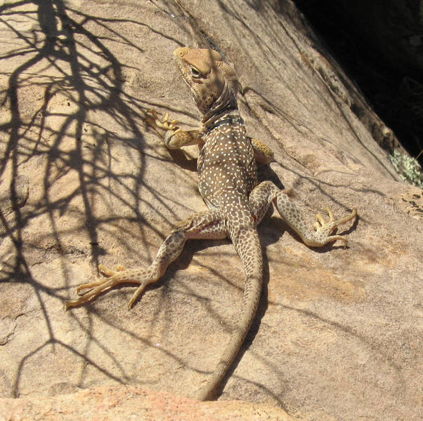 My friend, the lizard of Illusion Crags.