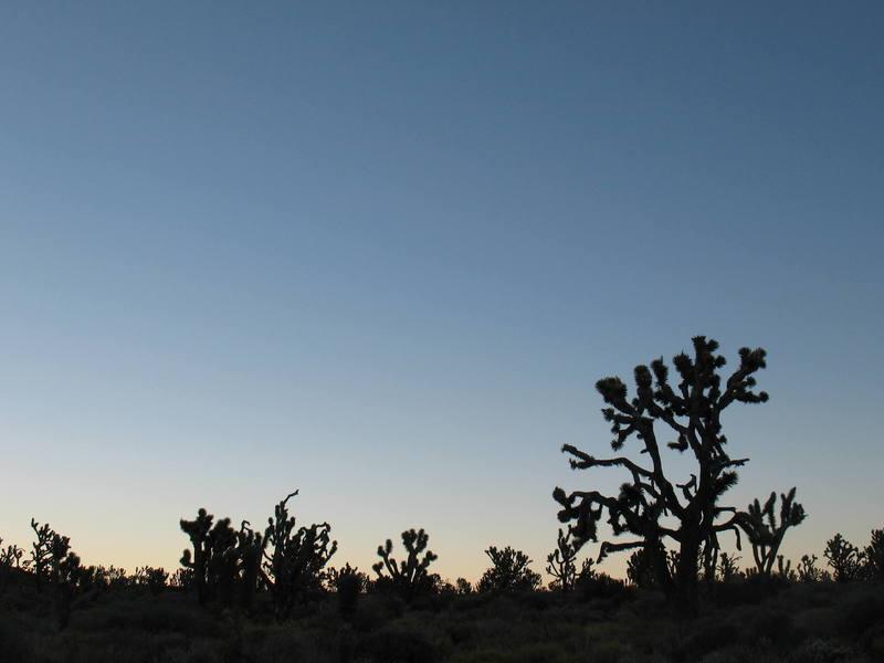 Morning light and Joshua Trees, Mojave National Preserve