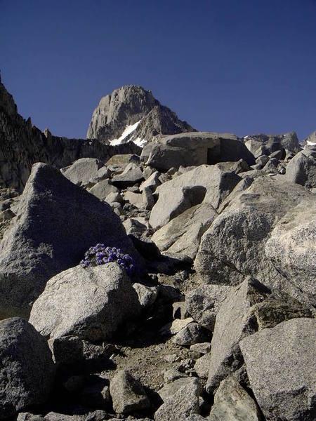 Mt. Sill and polemoniums.