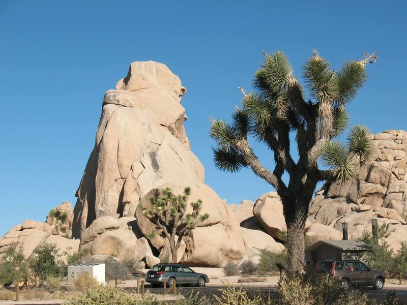 The Old Woman peering out from her shawl, Joshua Tree