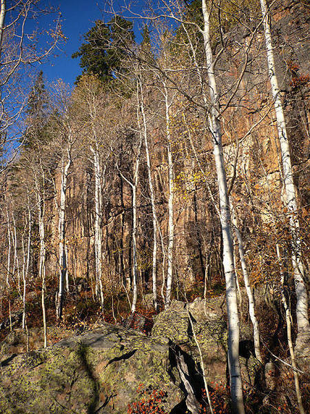 Jax Cliff hidden behind a line of aspens.