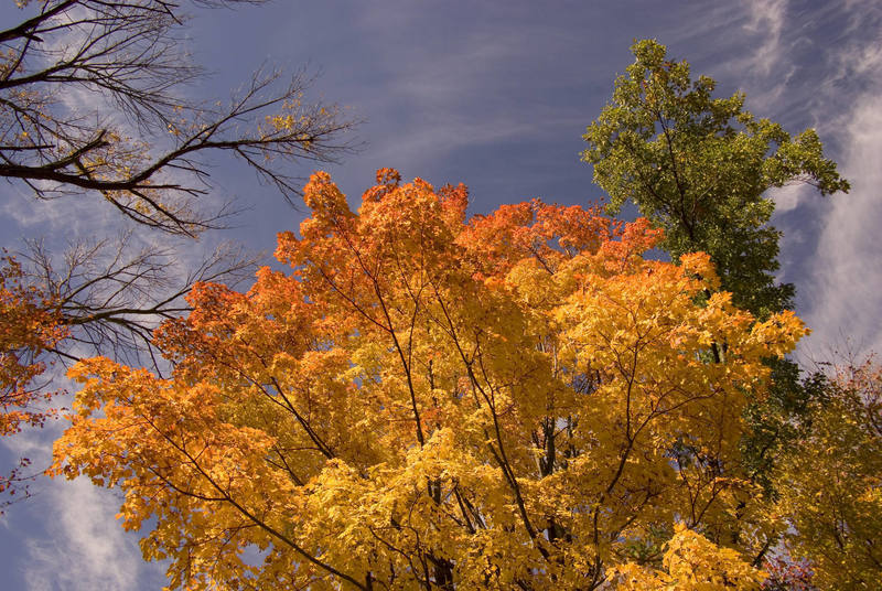Fall colors at Devils Lake. October '07.