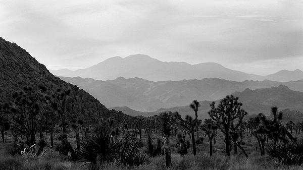 San Gorgonio from near The Seitch.<br> Photo by Blitzo.