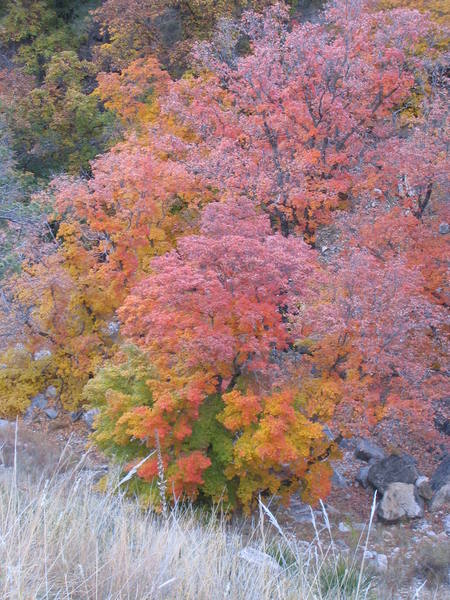 Fall colors in nearby (relatively) Dog Canyon, Guadalupe National Park