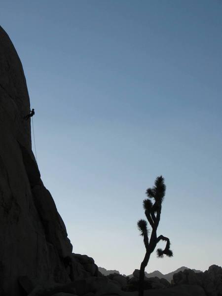Gettin' down in the desert, Joshua Tree.