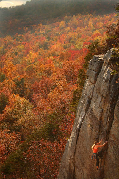 Nina Samaha climbing through the leaves at T-Wall.