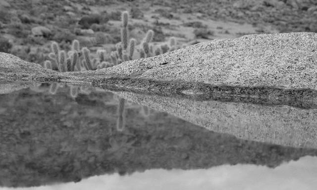 Desert reflections, Anza Borrego State Park<br> <br>