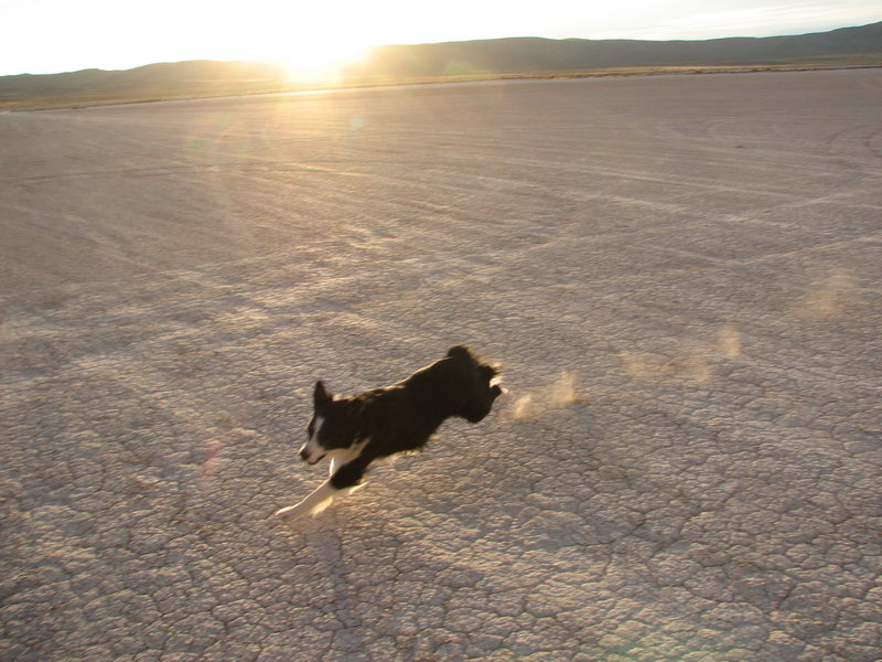 Rosco full speed on the Tule Hardpan at Ibex.