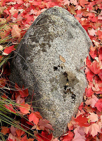 Autumn leaves and stone.<br> Photo by Blitzo.