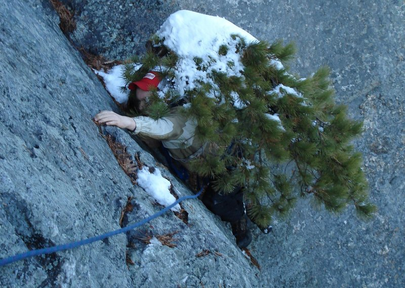 This is a picture of a boy being eaten by a tree on a winter ascent of Rock Rimmon... the trees get hungry...