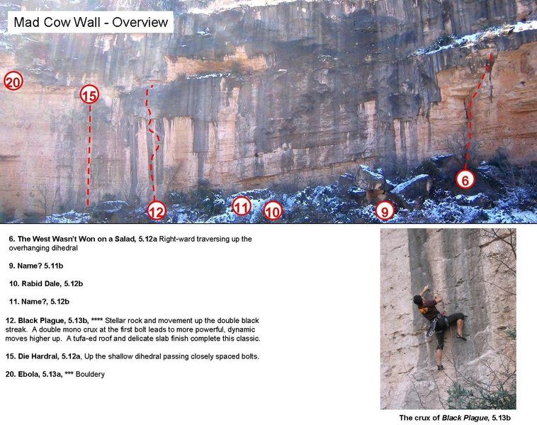 Overview of (most of) the Mad Cow Wall.