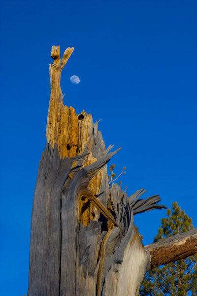 Winter Moon over rotten stump