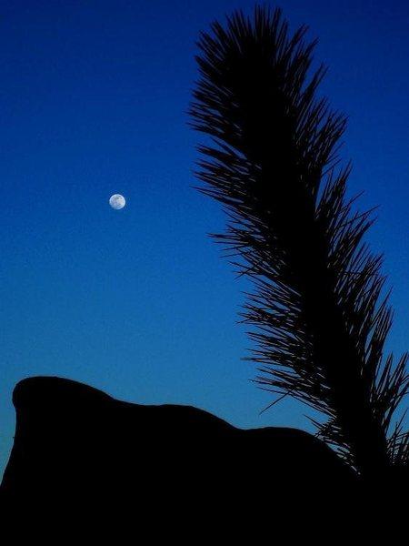 Yucca/Rock/Moon