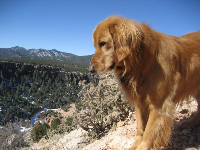 Tucker looking at the Darkside from Cactus Cliff, Shelf Rd March '08