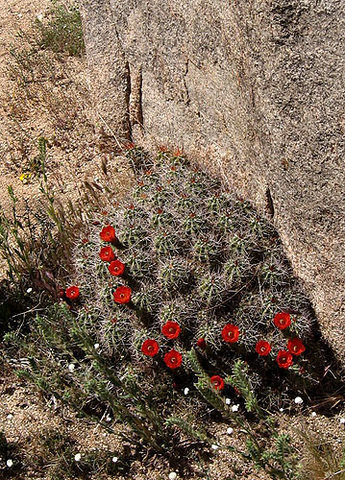 The cactus at the base.<br> Photo by Blitzo.
