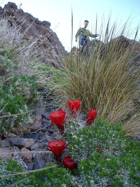 Jonny descending from the Castle Peak summit in the<br> Mojave desert.<br> <br> (Taken 4/30/08)