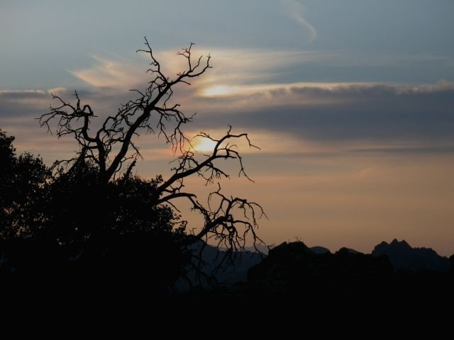 Approaching darkness, Joshua Tree NP