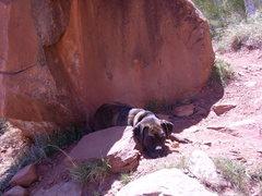 Rock Climbing Photo: Sammy