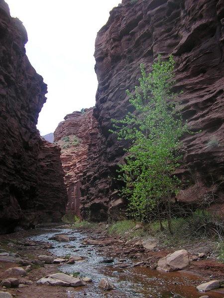 Rock Climbing Photo: Slot canyon