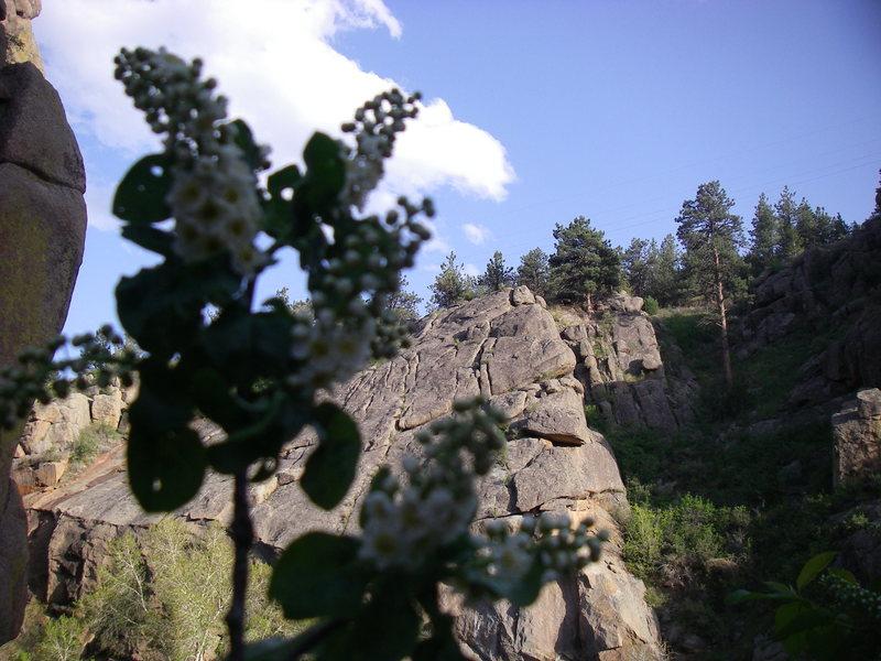 Rock Climbing Photo: Spring.