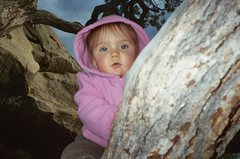 Rock Climbing Photo: Avary sent a couple of hard tree problems.
